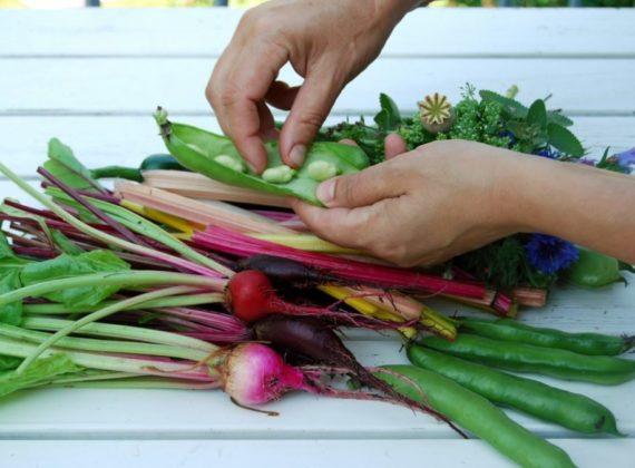 bio élelmiszer