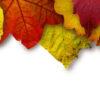őszi kuponnapok