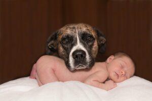 kisbaba érkezik kutya a családban
